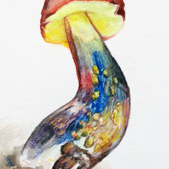 Watercolor-painting-Boletus-Sensibilis-mushroom