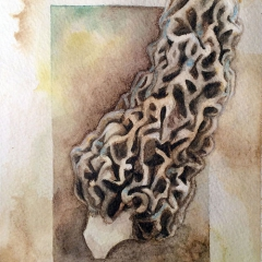 Watercolor-painting-Morel-mushroom-3