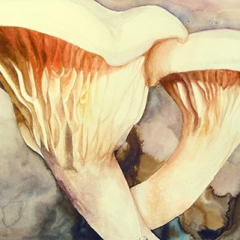 Watercolor-painting-Oyster-mushroom