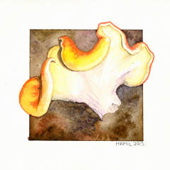 Watercolor-painting-Smooth-Chanterelle2-mushroom