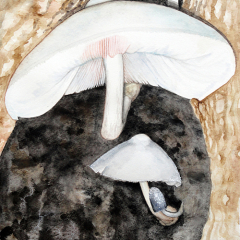 Watercolor-painting-Tree-Volvariella-mushroom