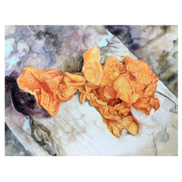 alison-hamil-mushroom-paintings