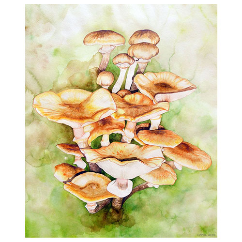 alison hamil watercolor mushrooms
