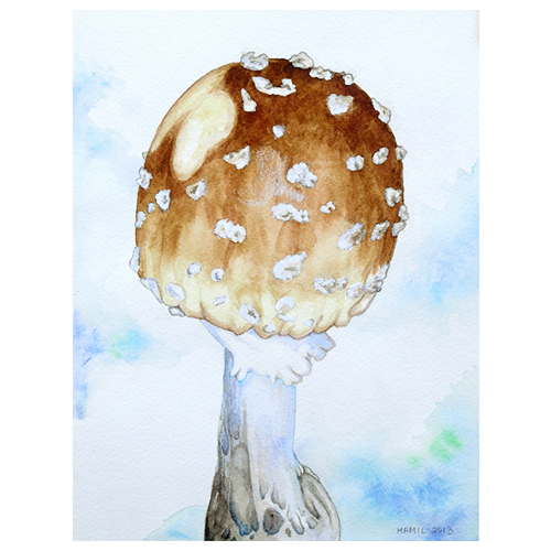 hamil watercolor mushrooms alison