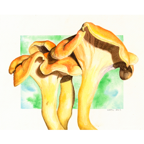 mushroom paintings alison hamil