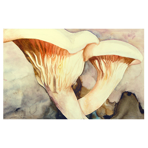 mushroom paintings watercolor hamil